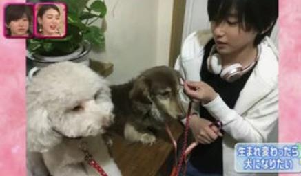 道枝駿佑の犬