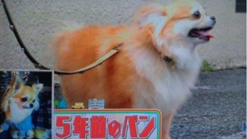 堂本光一 犬