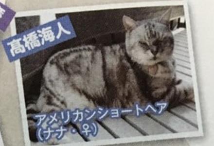 高橋海人 ペット 猫
